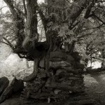 """Extraordinary trees in the series of """"Portraits of the time"""". Photography by Beth Moon"""