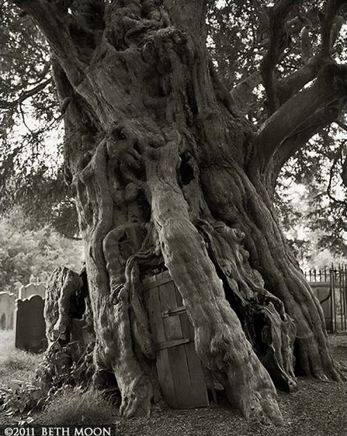 """Fabulous trees in project """"Portraits of the time"""". Photography by Beth Moon"""