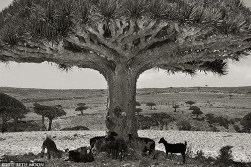 Photographer Beth Moon. Portraits of the time