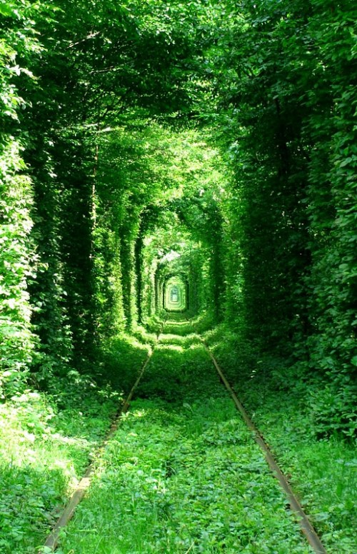 Picturesque Tunnel of Love in the village Klevan, Ukraine