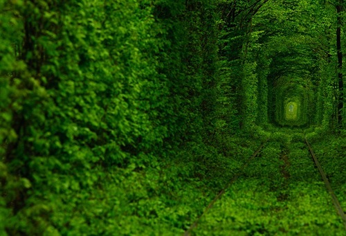 Picturesque Tunnel of Love