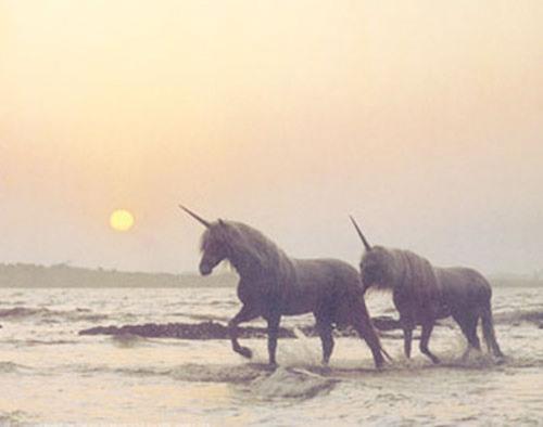 A couple of unicorns