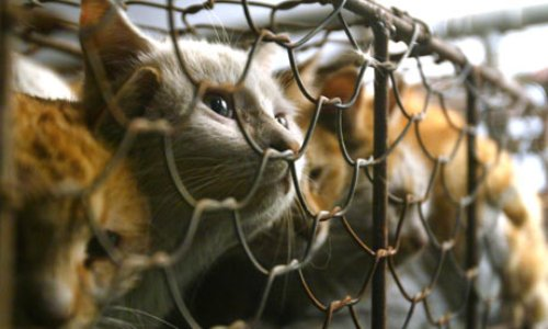 Heart breaking. Encaged cats