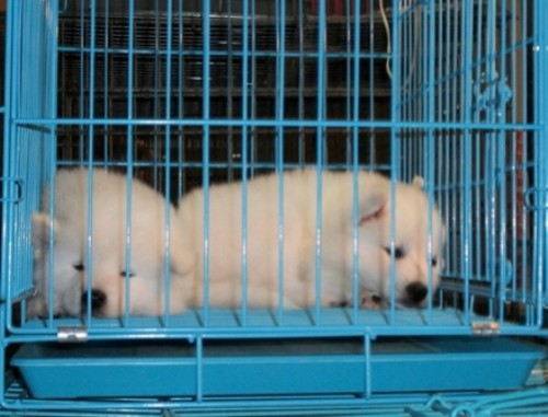 Kept in cage animals