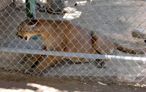 Stop cruelty toward animals
