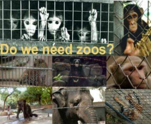 Do we need zoos?