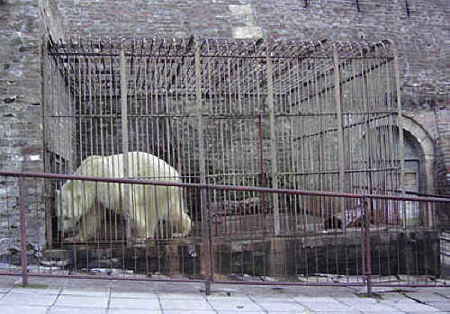 polar bear in cage