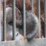 Horrible. Encaged animals