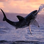 More than 90% of people attacked by sharks - survived