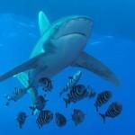 Sharks attack more men than women