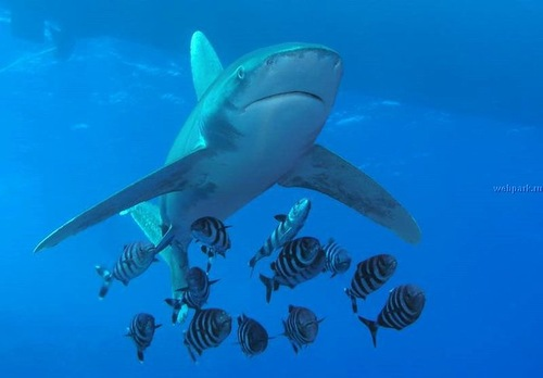 Sharks attack more men than women
