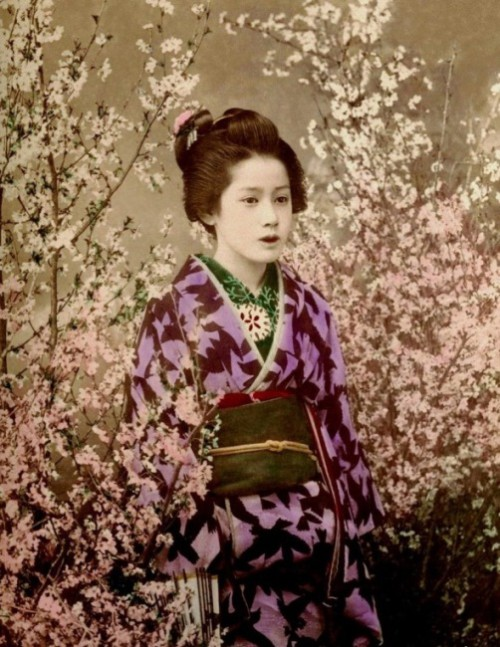 When sakura blossoms. Gorgeous Geisha