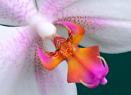 Orchid by American photographer Bill Atkinson