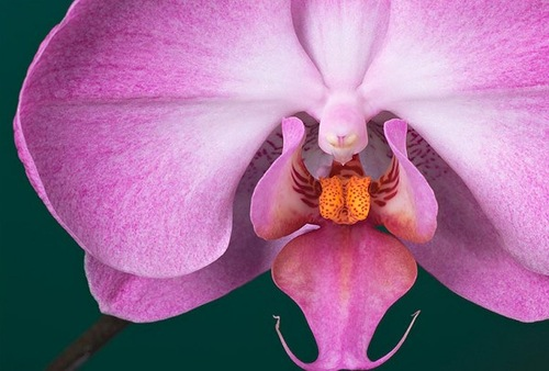 Flower photography by Bill Atkinson