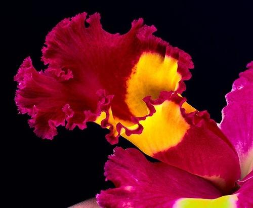 Burgundy color flower. photographer Bill Atkinson