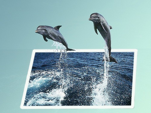 Switzerland Bans Dolphins in Captivity