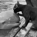 Switzerland Bans Dolphins in Captivity