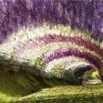 Japanese garden of flowers beautiful Kawachi Fuji Garden