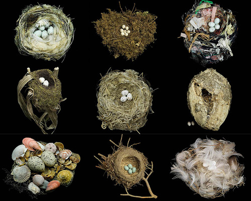 Nests and the Birds that Built Them