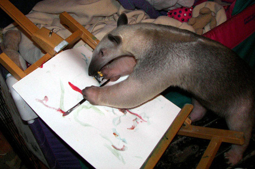 Aardvark Stewie. The cost of pictures – not sold