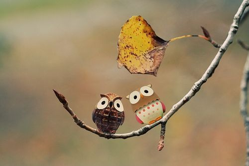 Creative photo with two Owls