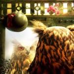 Mirror, mirror... About Owls