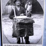 An organ grinder with a monkey