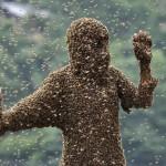Shaoyang, Hunan Province, China. Bee bearding contest