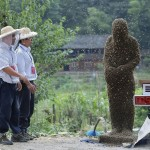 Chinese Bee bearding competition in Shaoyang, Hunan Province