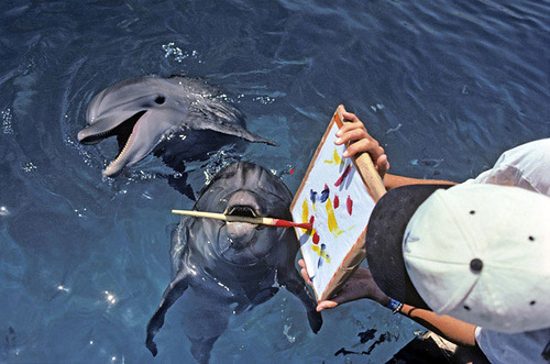 Animal painters Bottlenose Argasi, Gabija and Gloria
