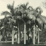 Cairo, Azbakii gardens. Egypt in retro photographs of 1870