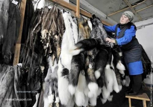 Denmark is the leading mink-producing country, accounting for nearly 40% of world production. Finland is the largest United States supplier of fox pelts. The United States is a major exporter of fur-skins