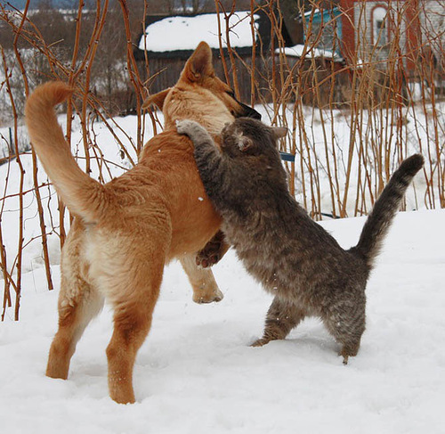 Amazing friendship between cat Platon and dog Bulka. Photo by Elena Chaplinskaya, Russia