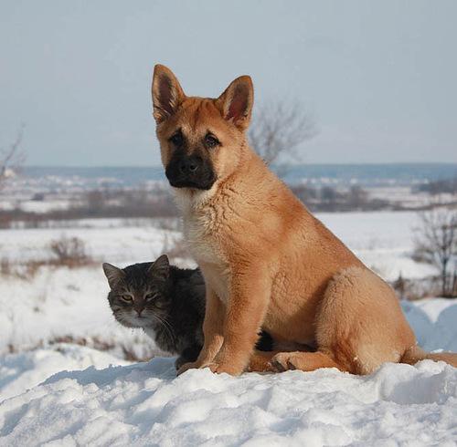 Touching friendship between cat Platon and dog Bulka. Photo by Elena Chaplinskaya, Russia