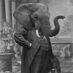 Elephant man. Grand Ole Bestiary. Humans with animal head. Vintage project of Pseudo-retro black and white photo