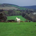 Green field of Ireland