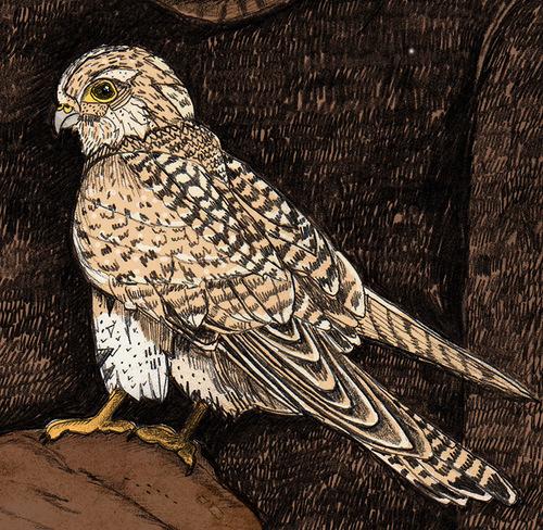 A boy with a hawk. Book illustration by British artist Sandra Dieckmann