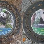 Koala – Manhole covers. Japanese photographer MRSY