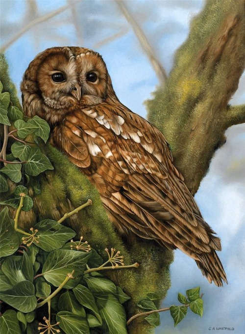 British Wildlife Artist Carl Whitfield
