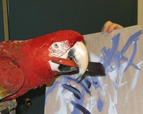 Animal painters Parrots