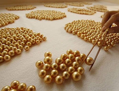 Rare Golden Pearls in a Mysterious Island Palawan