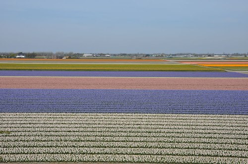 Outside Lisse, near the Keukenhof, Holland
