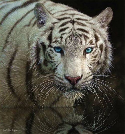 Realistic paintings by Collin Bogle