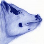 Pig's head. Ballpoint pen drawing by Sarah Esteje, French artist