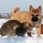 Touching friendship between cat Platon and dog Bulka. Photo by Elena Chaplinskaya, Russia