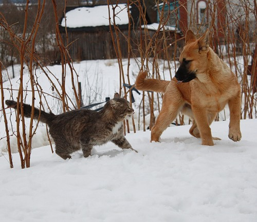 cat Platon and dog Bulka. Photo by Elena Chaplinskaya