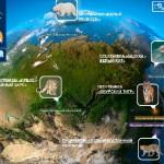 Conservation projects – Amur Tiger, Beluga – White Whale, Polar Bear, Snow leopard, Amur leopard