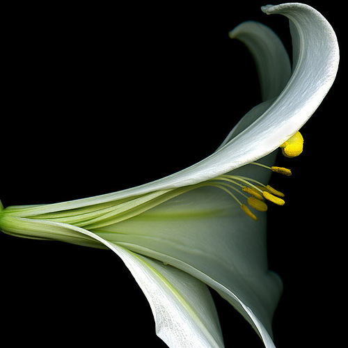 Beautiful flower photography by Magda Indigo