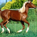 "The left side of a horse is called the ""near side"" and the right side is the ""off side"""