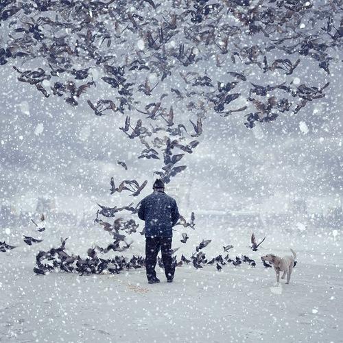 Photoart by Caras Ionut